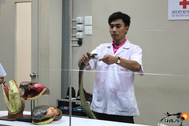 Достопримечательности Бангкока.Змеиная ферма.Институт Пастера.в Бангкоке.Snake farm Bangkok