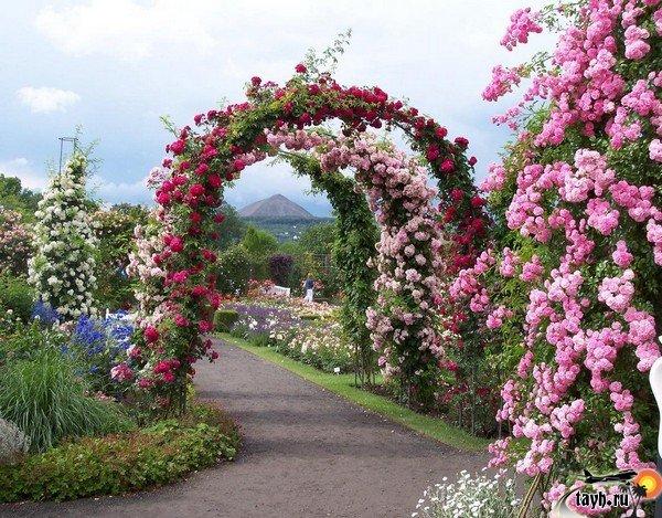 Сад роз и орхидей