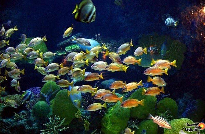 Океанариум Бангкока.Siam Ocean World