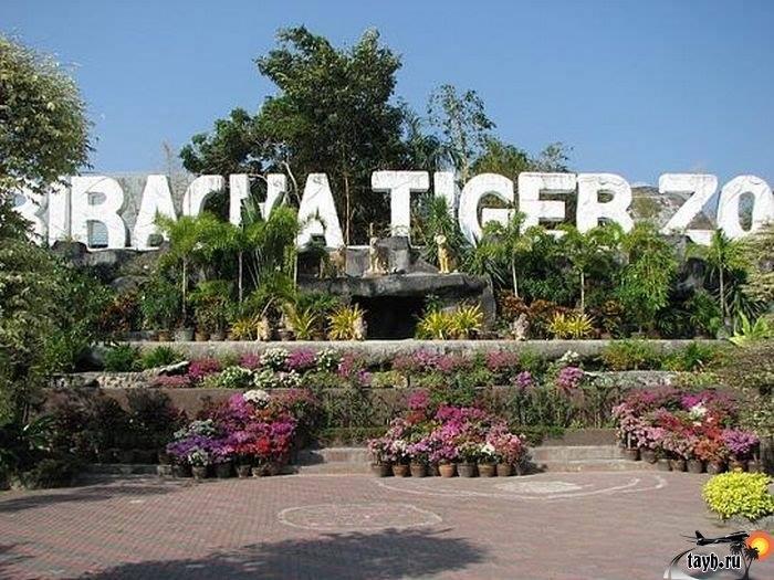 Тигровый зоопарк.Sriracha Tiger Zoo.