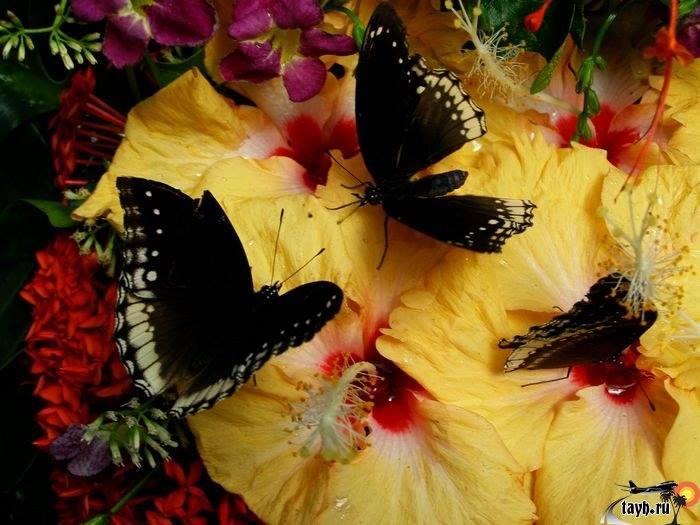 Парк бабочек.Пхукет.Butterfly garden. Тайланд