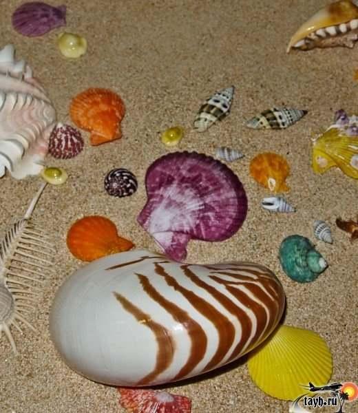 Музей морских раковин на Пхукете.Seashell museum exhibits phuket thailand