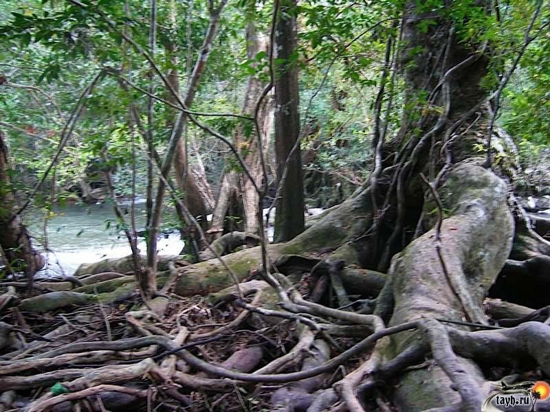 Кхао-Пхра-Тхео .Park Khao Phra Taew.Водопад Пхукет