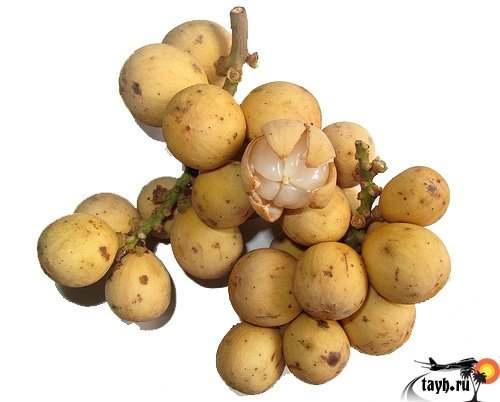 Лангсат, фрукты Тайланда