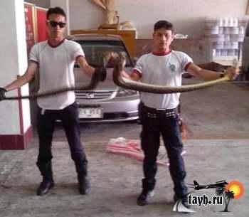 змеи в Пхукете