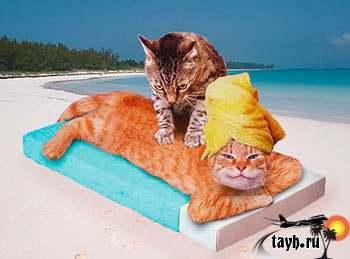 кот в Тайланд