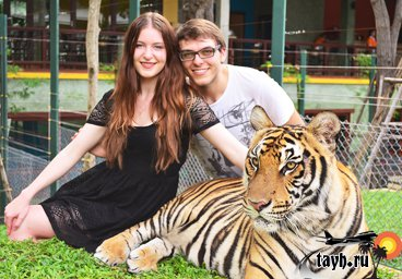 tiger kingdom Phuket