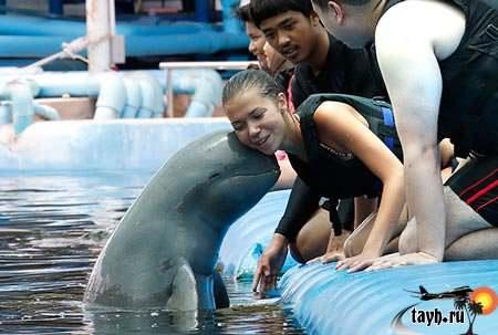 Пхукет дельфинарий