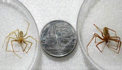 пауки в Тайланде