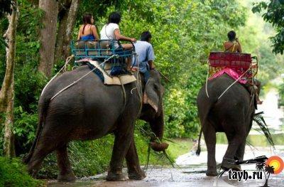 слон в Тайланде