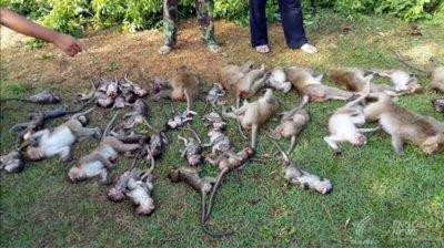 погибшие макаки